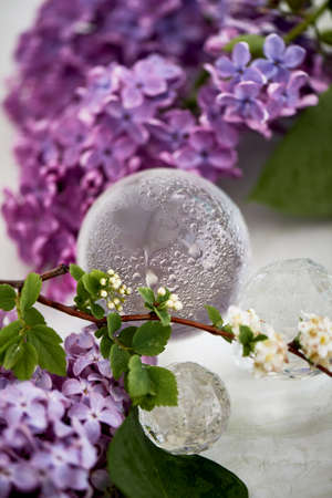 Crystal ball with drops of moisture around fresh lilac. Freshness and beauty.