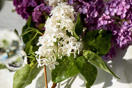 Branches of white and purple lilac. Natural wealth. Foto de archivo - 123523130