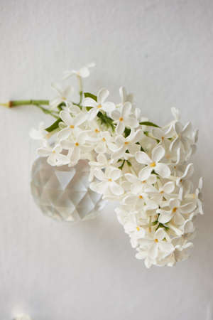 Branches of white lilac. Natural wealth. On a white background with round lenses.