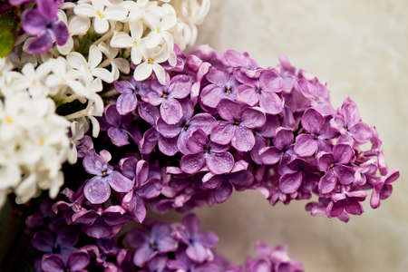 Branches of white and purple lilac. Natural wealth.