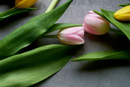 Two pink tulips joined heads as a sign of love and unity. Space for text. Grey concrete background.