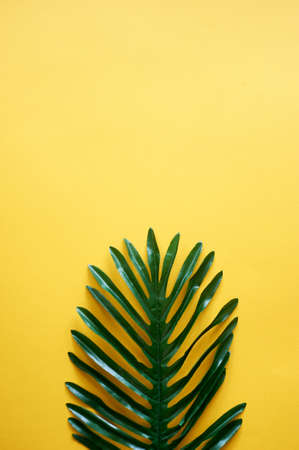 A leaf of a palm tree on a yellow background. A place for text. Creativity and minimalism.