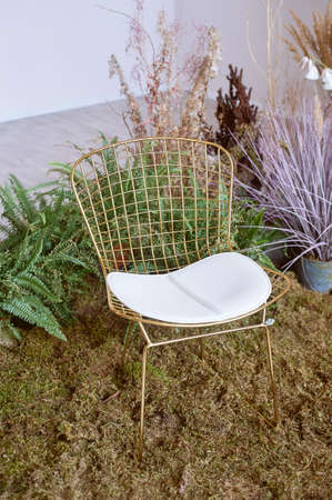 A golden chair with a mesh back stands on the moss. Eco design. Stylish interior with cereals and dried flowers. Standard-Bild