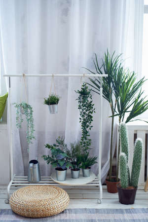 Light interior in the style of minimalism with white walls, curtains and floor. Lots of green plants and cacti. The green area in the room.