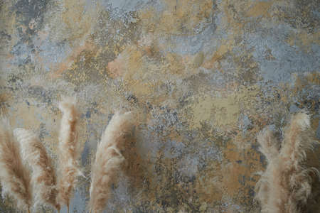 The wall is gray and sandy. With decorative plaster and parmas. Texture with a place for text, minimalism. Standard-Bild