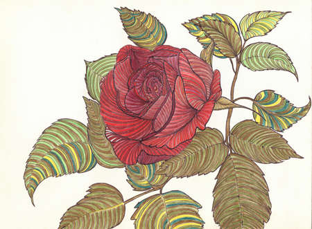 Beautiful red rose isolated on white with green petals. Art pencil drawing by hand. Closeup