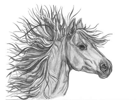 Beautiful horse illustration with bright colorful creative mane. Hand Drawn by pencil . Close-up portrait