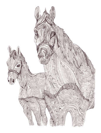 mare and foal: Illustration of mare and foal. Black and white style. Hand-drawn.