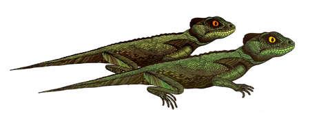 tribal dragon: Profile Lizard. Hand drawn.