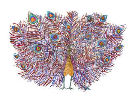 peafowl: peacock. beautiful tail. Stock Photo