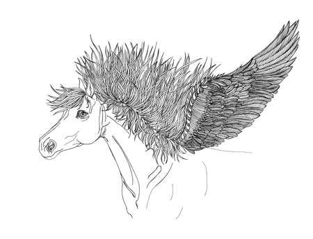 mane: Beautiful Horse with mane and wings.Pegasus.Drawning by pen .Close-up Stock Photo