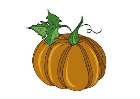 Pumpkin . Vector illustration on white background Illustration
