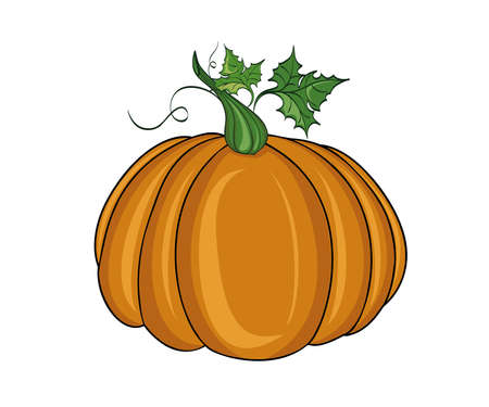 Pumpkin. Illustration on white background