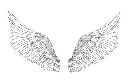black wings: Wings.  illustration on white background. Black and white style Illustration
