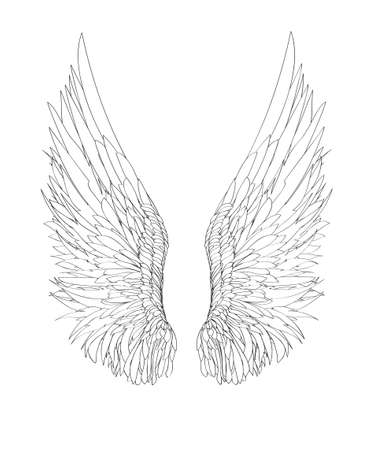 Wings. Vector illustration on white background. Black and white style Ilustrace