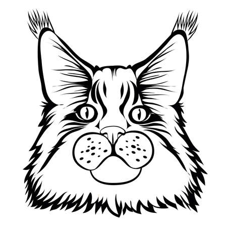 Male maine coon cat with beautiful brushes on the ears with curious serious look. Black contour. Graphic style. Vector illustration. Isolated.