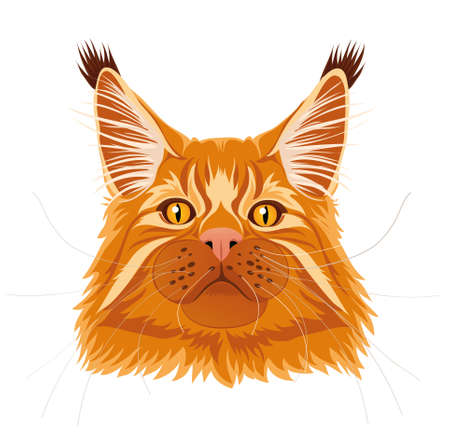 Male red solid maine coon cat with beautiful brushes on the ears with curious serious look. Vector illustration. Isolated. Illustration