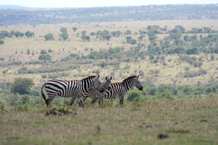 high plateau: taken from the high plateau of the Masai Mara in Kenya looking out over the plains of the Serengeti in Tanzania. Stock Photo