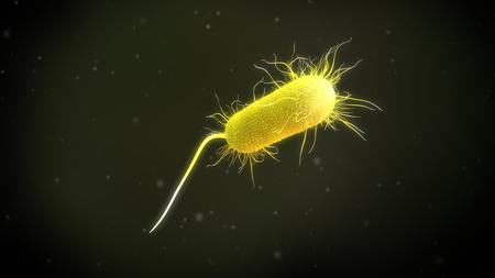 3d illustration of a Pseudomonas Aeruginosa Bacteria