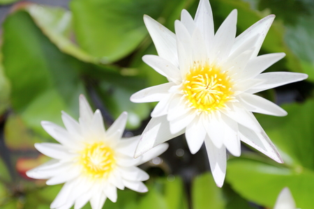 Beautiful spring bokeh for design photo