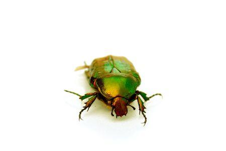 viability: green bug on white background