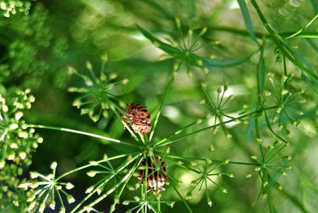 viability: red bug on green herb by summer in garden