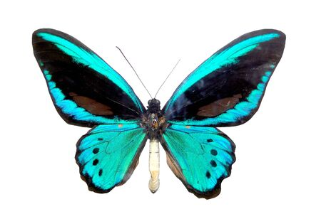 briliance: blue brilliant butterfly with wing close-up cutout