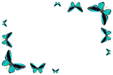 frame from butterfly of the blue of the colour Stock Photo - 5261627