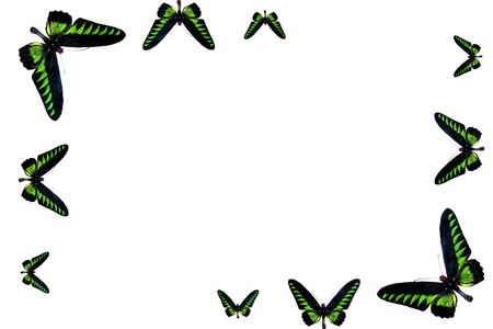 frame from butterfly of the green of the colour Stock Photo - 5261626