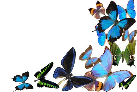several butterflies on white background Stock Photo - 5937874