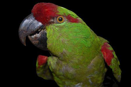varicoloured: varicoloured parrot sitting on branch Stock Photo
