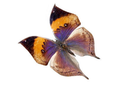 briliance: blue-yellow brilliant butterfly with wing close-up cutout