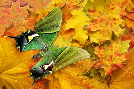 red autumn sheet in park on branch with green butterfly photo