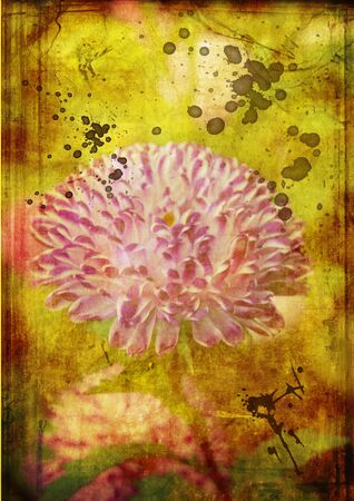 red aster on old paper grunge