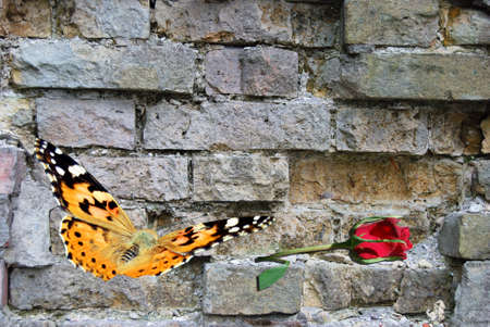 yellow butterfly on background old wall