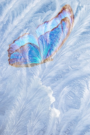 blue butterfly for freezing glass