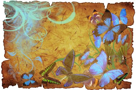 butterflies on old vellum with spot and rift