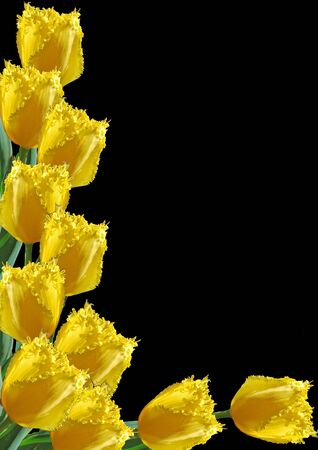 exemplar: frame from yellow tulips by springtime Stock Photo