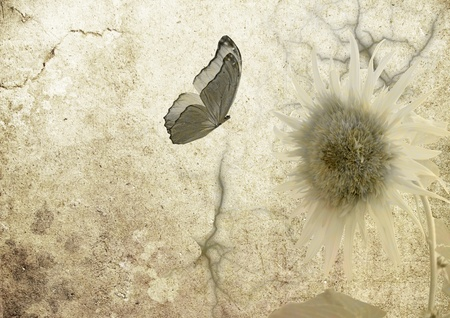 butterfly on old vellum with sunflower photo