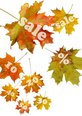 red autumn leaf for sale