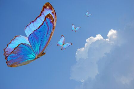 blue butterfly fly on background sky