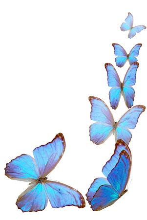 blue butterfly fly on insulated background