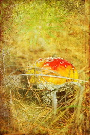fly agaric in autumn wood