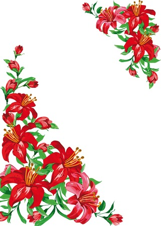 frame of red lily on white background