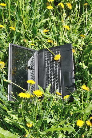 notebook lying on herb with yellow dandelion