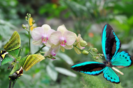 blue and green butterfly and branch orchid