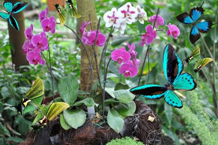 blue and green butterfly and branchs orchid Stock Photo - 75677964
