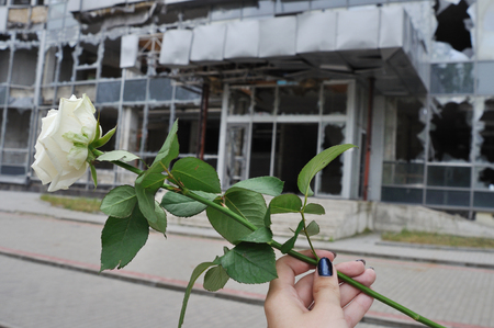 white rose in hand on background of the building which has destroyed war in Donetsk Stock Photo