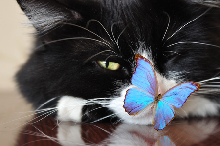 home black cat with one opened by eye and blue butterfly