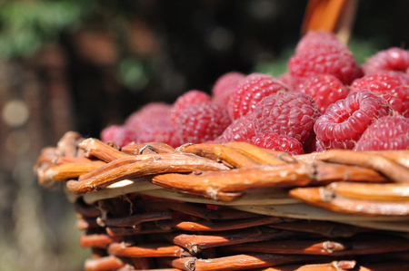 berries of the red ripe raspberry in garden